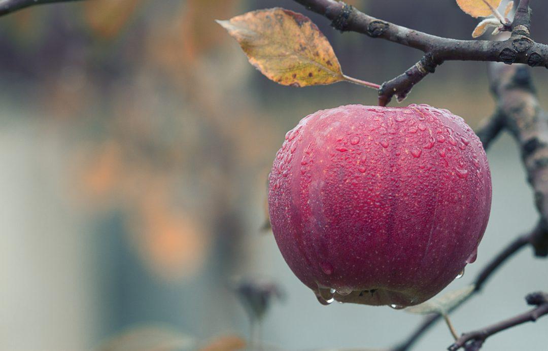 Top 3 Rezepte mit Äpfeln