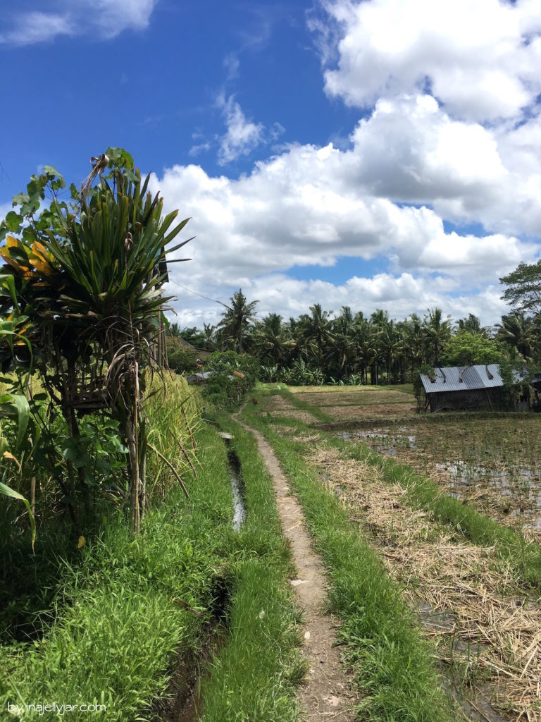 Reisfelder hinter dem Café Pomgranate in Ubud, Bali